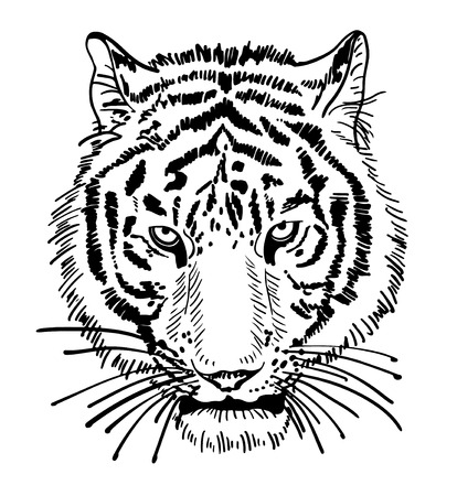 artwork of tiger face portrait, head silhouette, black and white sketch digital drawing, isolated on white background, vector illustration