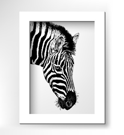 artwork head profile zebra, digital sketch of animal, realistic black and white drawing with white minimalistic frame, vector illustration Illustration