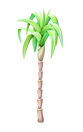 palm tree drawing isolated on white background, vector illustration