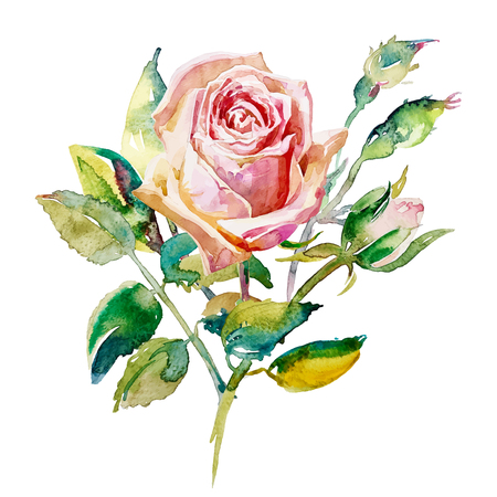 decorative hand painting of rose isolated on white background