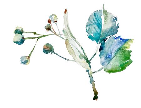 mano disegno acquerello botanica elemento isolato su bianco