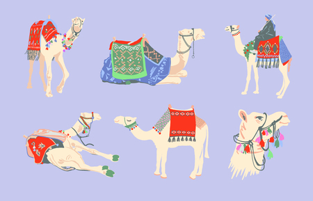 set of egyptian camel decorated with bright carpets and ornaments in minimalistic hand drawing style, vector illustration collection