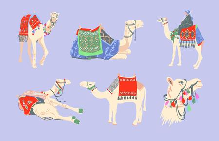 Set von ägyptischen Kamelen, dekoriert mit hellen Teppichen und Ornamenten im minimalistischen Handzeichnungsstil, Vektorillustrationssammlung