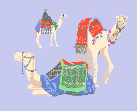 egyptian camel decorated with bright carpets and ornaments Ilustracja