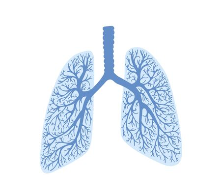 lungs - part of the human body, respiratory organ