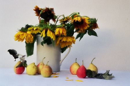 stillife: Stillife with sunflowers and pears