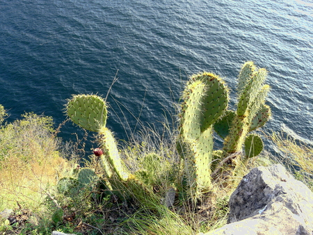 seaa: The cactus search the water Stock Photo
