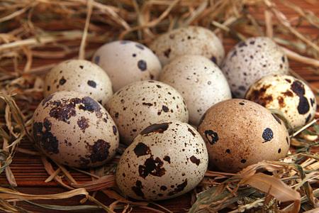 rustic: Quail eggs. Rustic style