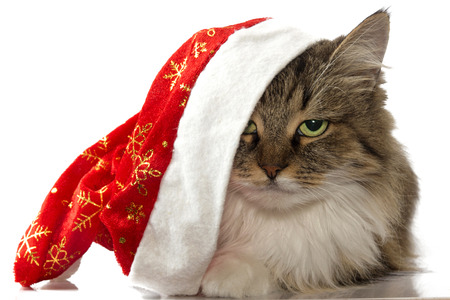 new year cat: New year cat with Santa red hat looking at camera isolated on a white background