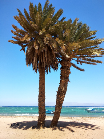 Palm trees on beach. Sea, sky, boat, sunny day. Dahab, Sinai, Egypt, Red Sea. Stockfoto
