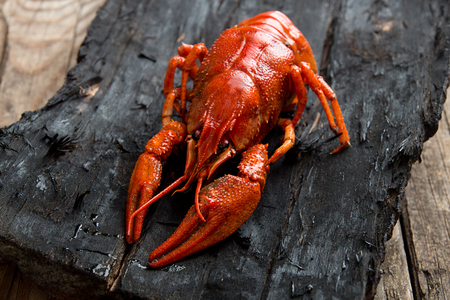 Boiled cooked crayfish crawfish ready to eat on black wooden rustic background.