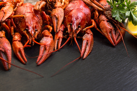 Boiled cooked crayfish crawfish ready to eat on black background. Copy space.