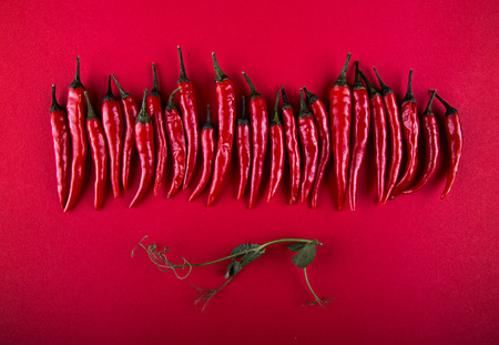 Row of small red chili peppers and pea sprout over on red background. Flat lay. Top view. Overhead. Copy space.