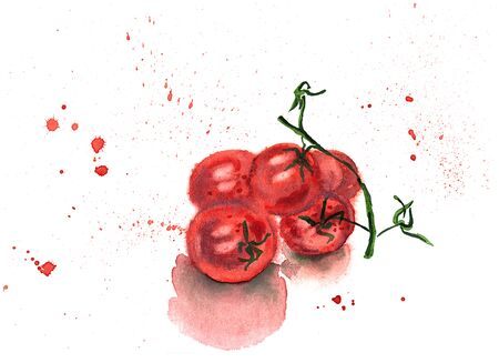 Watercolor hand drawing sketch illustration of branch of red ripe tomatoes with red spray on white backgroud