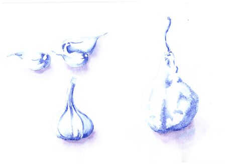 Watercolor hand drawn sketch illustration of garlic and pear. Drawing by shadow. Blue color. White background