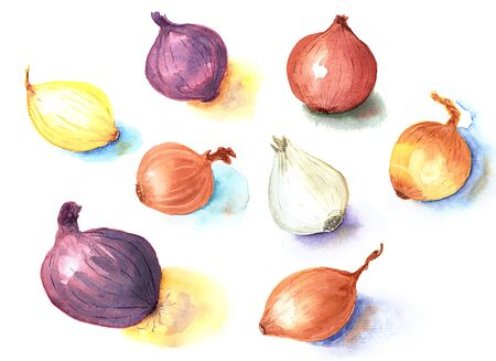 Watercolor hand drawn sketch illustration of kind of sorts onions on white background Stock Photo