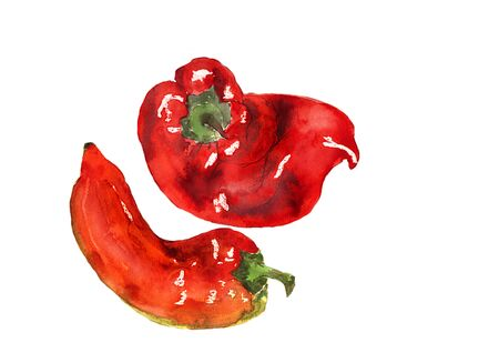 Watercolor hand drawn sketch illustration of red pepper on white background. Copy space