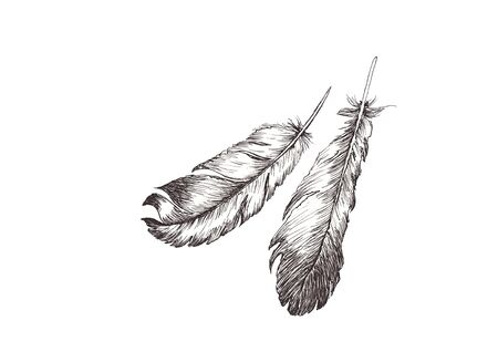 hand drawn sketch illustration with liner of bird feathers isolated on white background