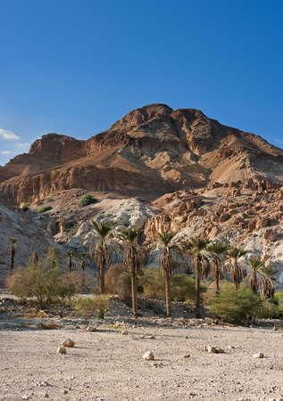 ein: Red mountain in Ein Gedi National park, Israel