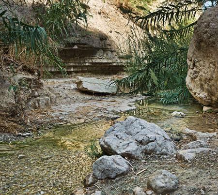 gedi: Stream in Ein Gedi National park, Israel