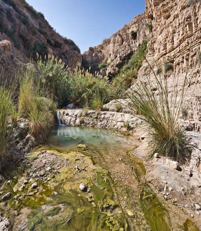 Spring in Ein Gedi National park, Israel photo
