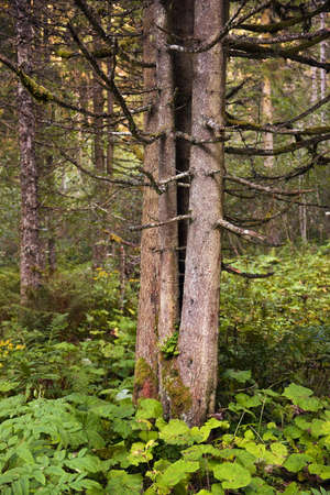 hohe tauern: Forests in the Hohe Tauern National Park, Austria