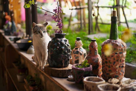 Cat sitting among self-made bottles and pots, Rosh Pinna, Upper Galilee, Israel Stock Photo