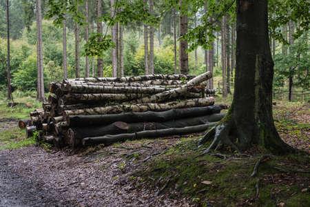 czech switzerland: Parco nazionale boema Svizzera Svizzera Ceca, Boemia, Repubblica Ceca Archivio Fotografico