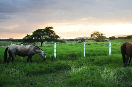 Horse. Series, see more.. photo