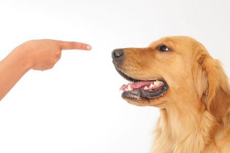 Cheeky dog. Concept of teaching. photo