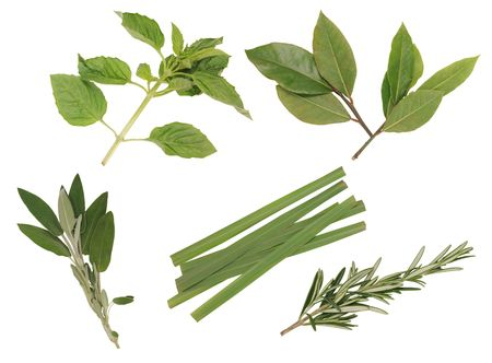 Herbs collection. photo
