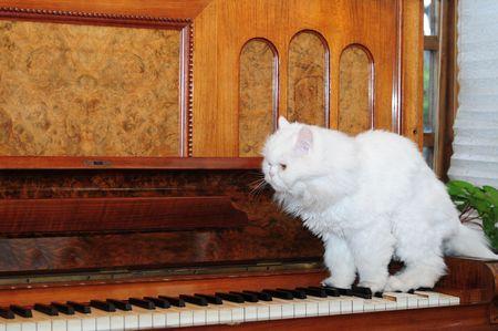 gato jugando: Gato tocando el piano. Foto de archivo