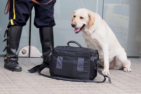 suspected: Suspected handbag. Stock Photo