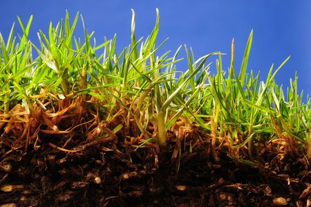 surface level: Surface level of grass and soil. Stock Photo
