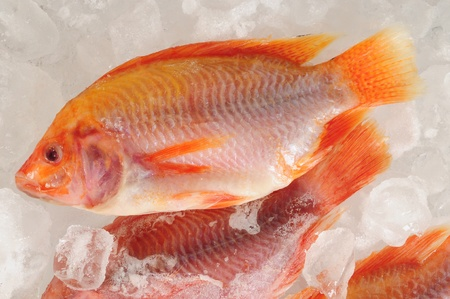 Frozen fish. Stock Photo - 11209592