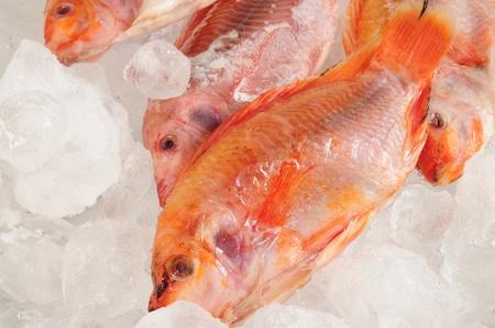 Frozen fish  photo