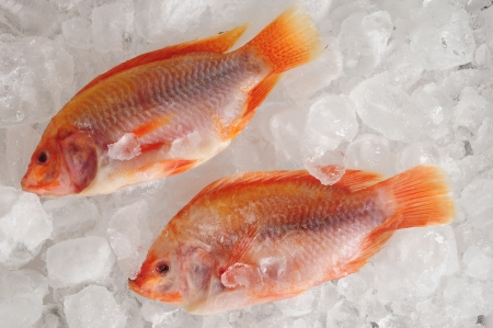 Frozen fish  photo