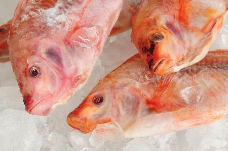 Frozen fish Stock Photo - 16430144