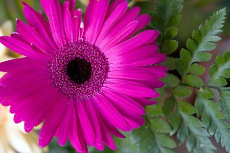 Pink herbera flower bouquet