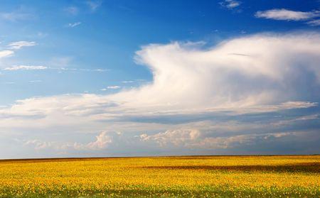 Endless sunflower field with deep blue sky Stock Photo - 5743928