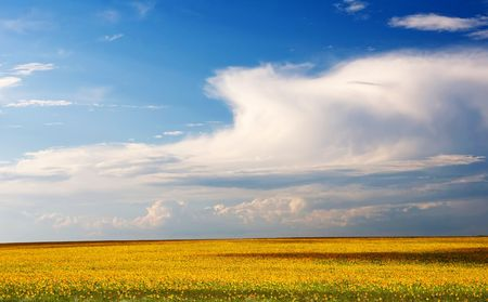 Endless sunflower field with deep blue sky Stock Photo - 5743928