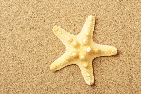 Starfish lie on sand seacoast photo