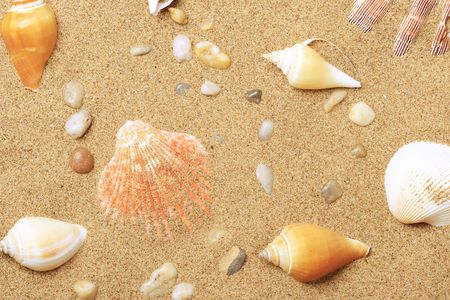 seacoast: Cockleshells and a starfish lie on sand seacoast