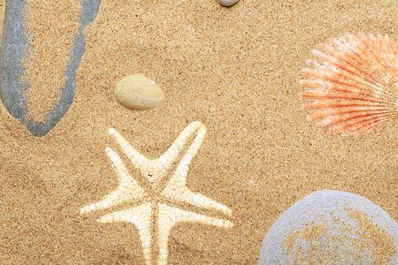 Cockleshells and a starfish lie on sand seacoast photo