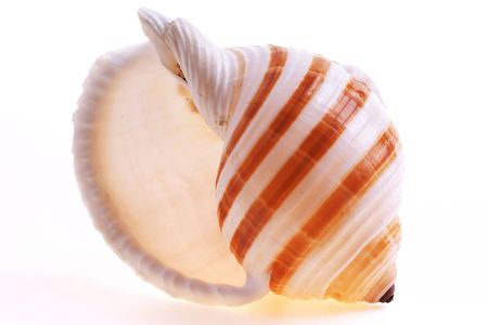 shell fish: Isolated seashel on white background Stock Photo