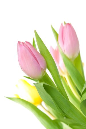 bouqet: Beautiful pink tulip bouqet isolated on white background