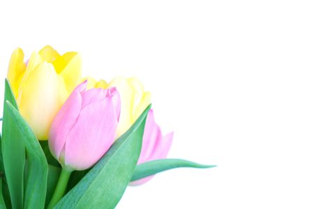 bouqet: Beautiful tulip bouqet isolated on white background Stock Photo