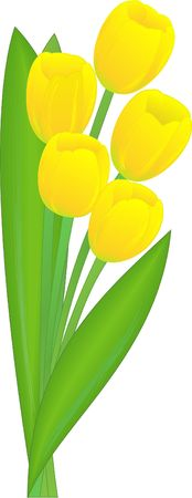 the bouquet of the yellow holiday tulips Vector