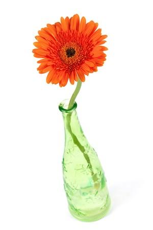 Gerbera flower in green bottle, isolated on white Stock Photo - 7328028
