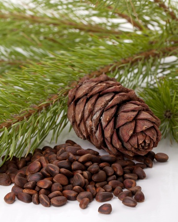 Siberian pine nuts and needles branch on white background Stock Photo - 8801686